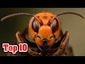 Top 10 MOST INVASIVE Species Caused By Man