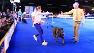 Азия Виннер 2018. Международная выставка собак