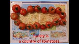 Турция - Страна Лимония и Помидория? Почему? 20.12.2015 Turkey, Turkiye(VIDEO LINK = https://www.youtube.com/watch?v=7lctYjb2Z_M Турция - Страна Лимония и Помидория! Турция - Страна Апельсиния и Мандариния..., 2015-12-22T16:29:12.000Z)
