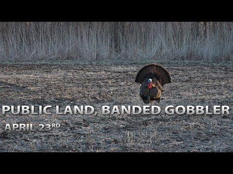 Public Land Tom, Banded Gobbler! | Spring Thunder