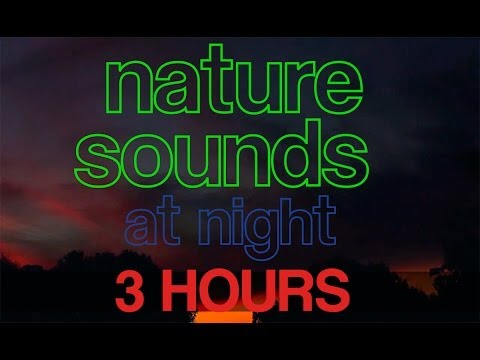 3 Hours of Nighttime Nature Sounds, Crickets, Frogs, Birds, Nature HD [1080p]