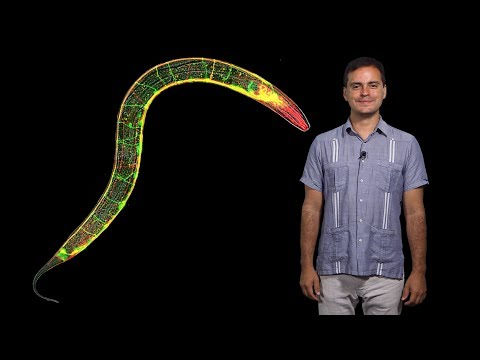 Daniel Colon-Ramos (Yale/HHMI) 1: Cell biology of the synapse and behavior in C. elegans