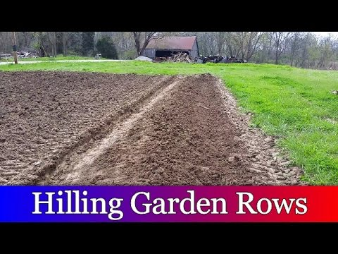 Hilling Rows in the Garden