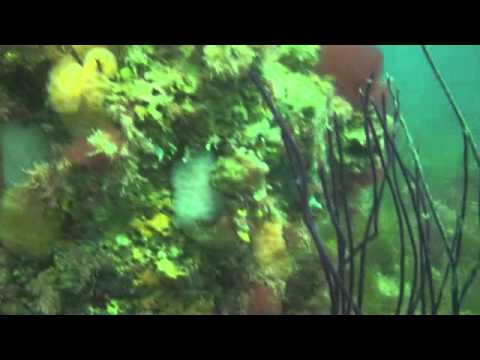 Gulf Scuba Diving -Airplane Barge Dive Site