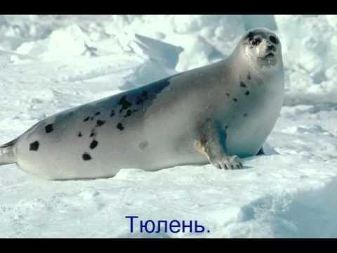 Животные холодных районов реферат 6276