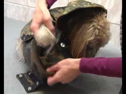 Mäntel für den Hund! - YouTube