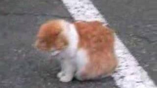 野良ネコなんですが、堂々として、人を見下ろしているんです。餌をあげ...