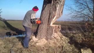 scinanie drzewa