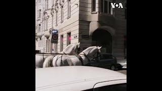 旅游业停滞期间 维也纳观光马车提供送餐服务