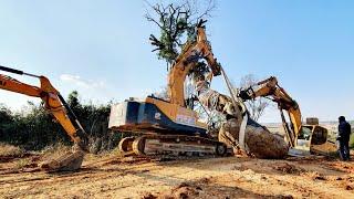 [카고맨]굴삭기 넘서가유~사고위기 넘기며 대형나무 상차 08굴착시2대 02굴삭기1대 로우베드 트레일러 1대 작업 Large trees extreme jobs /트럭커/조경수