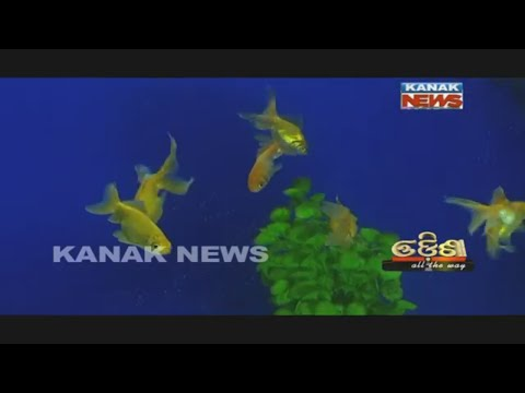 Odisha All The Way -EP- 21- Paradip- Marine Aquarium