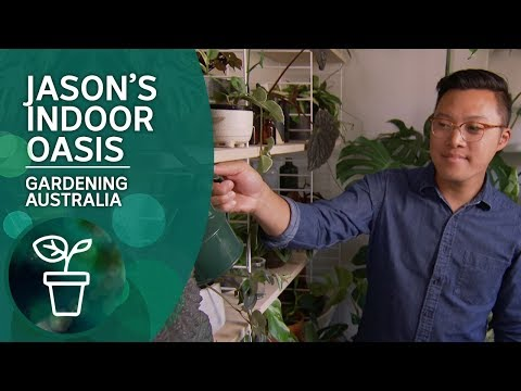 Jason Chongue's Plant-filled Home