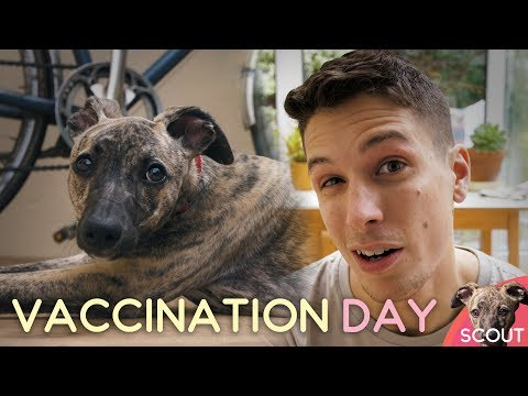Vaccination day - Scout #006