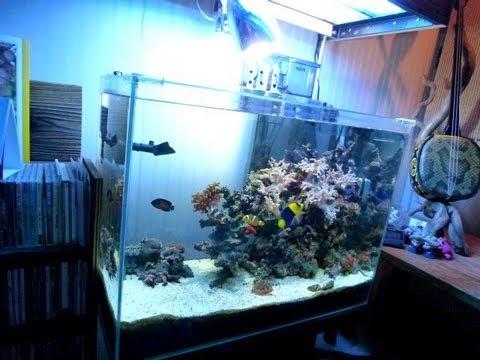 Marin Aquarium Submarine