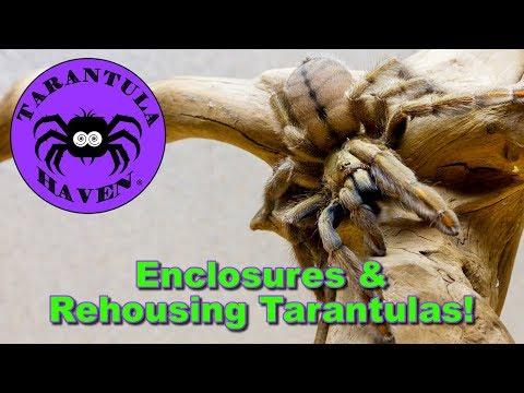 Enclosures & Rehousing Tarantulas!