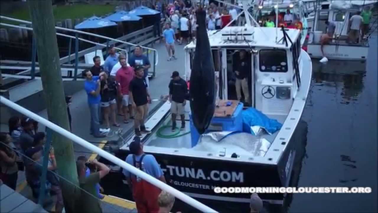 Tuna Com Lands 914lb Tuna At The 2014 Bluefin Blowout Doovi