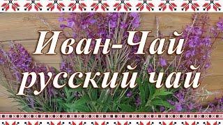 видео Иван-чай, копорский чай, кипрейный напиток