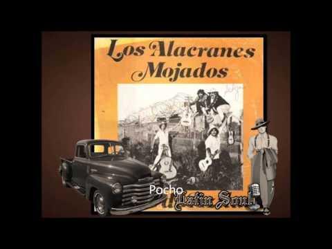 Los Alacranes Pocho