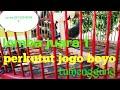 Tumenggung Perkutut Lokal Juara  Di Kabupaten Lamongan  Mp3 - Mp4 Download