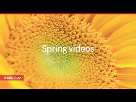 Spring 2018   Shutterstock