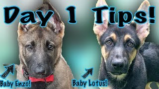 What to Know When You Get a German Shepherd Puppy!