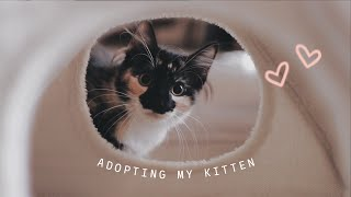 EVERYTHING I WISH I KNEW BEFORE ADOPTING A KITTEN