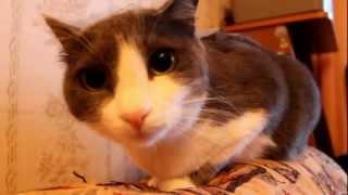 Кот и Скотч ( Cat and Scotch )