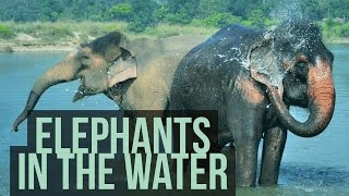 Elephants enjoying the water
