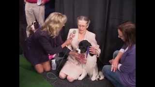 2012 Westminster Kennel  Club Dog Show At Madison Square Garden Highlights