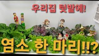 봄,여름,가을,겨울!채소 걱정 없어요♡#웰스팜#식물재배…