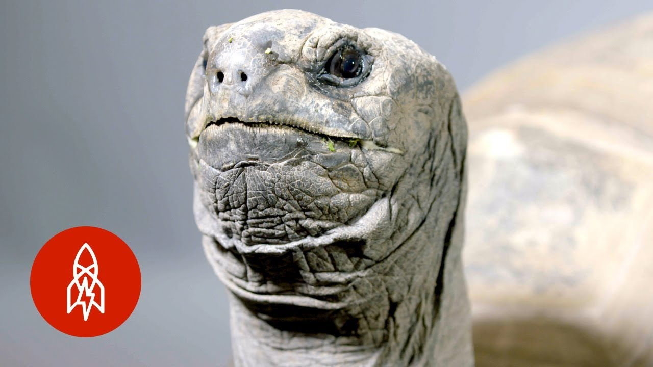 This Tortoise Will Outlive Us All
