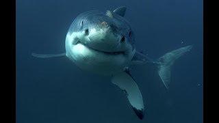 Shark Movie Review: Shark Attack (1999)