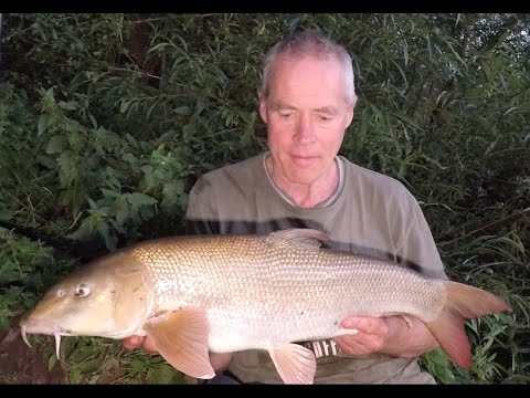 River Trent Barbel  A Session Of Mixed Fortunes By Patric Kyte