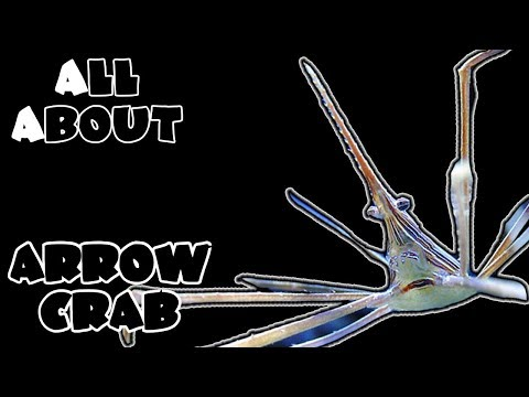 All About The Arrow Crab