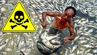#7 Thực Phẩm Trung Quốc Bịp Bợm Và Tồi Tệ Nhất Họ Không Bao Giờ Muốn Bạn Biết