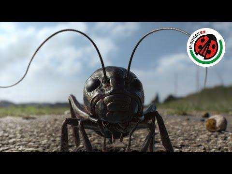 #DenkAnFred – IP-SUISSE, Biodiversität