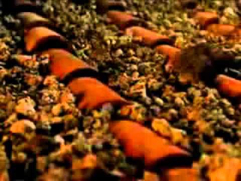 Documental Pompeya resumido