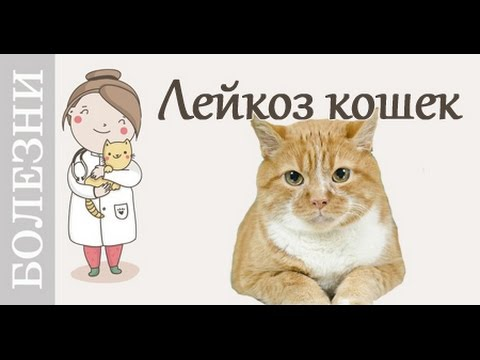 сахарный диабет кошек симптомы