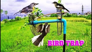 How To Make Bird Trap At Home – Amazing  Quick Bird Trap Easy Hole Using PVC And Electric Fan! 62