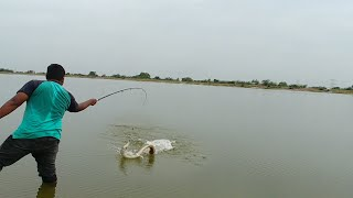 Fish hunting || Awesome Baam fish catch