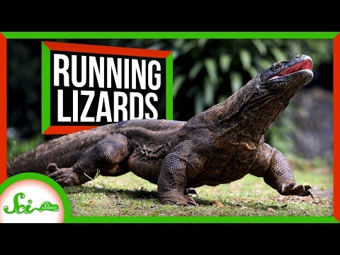 What Lizards Can Educate Us Concerning the Results of Training
