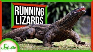 Why Lizards Don't Run Marathons