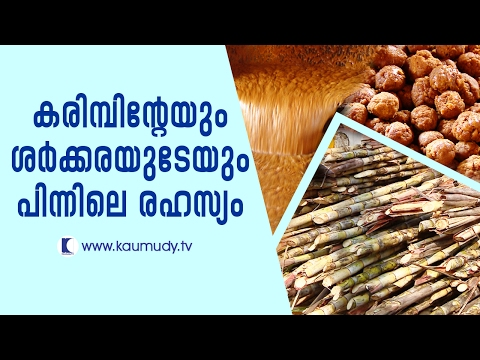 The secret behind sugar cane and jaggery | Haritham Sundaram | Kaumudy TV