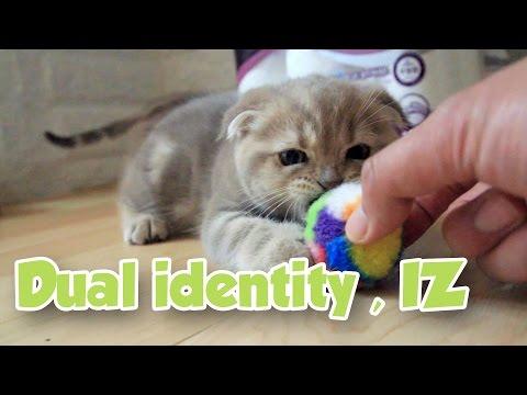 두 얼굴의 고양이 이즈 Dual Identity Cat おもちゃを執着する猫 [Suri&Noel] EP49 streaming vf