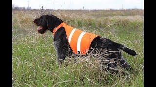 Сигнальный жилет Dog Ripstop Safety Vest