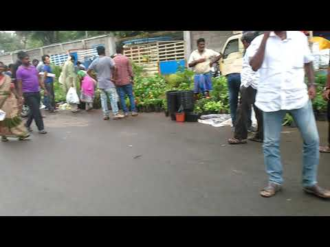 Live Garden plants and gardening materials sale at Pallavaram santhai