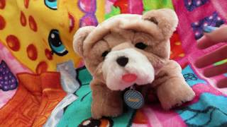 New Puppy Dog ! Rollie Little Live Pets Interactive Toy Animal