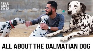 Facts About Dalmatian