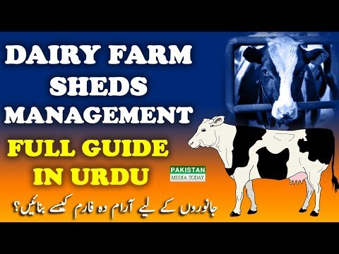 How to Build & Convert Dairy Farm into Control Shed | Dairy Farms Sheds Management in Urdu/Hindi