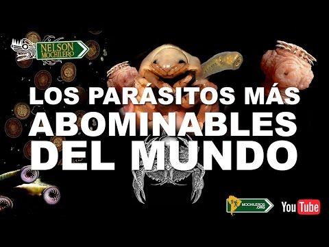 parasitos mortales para el ser humano
